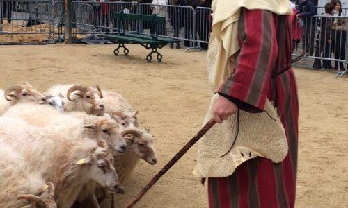 L'équipe de Carole Le Guellec, moutoniers, dresseurs de chiens de berger